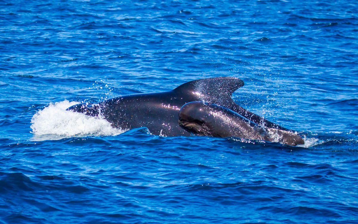 Donde ver delfines en la costa española  Los mejores lugares para avistar animales en España