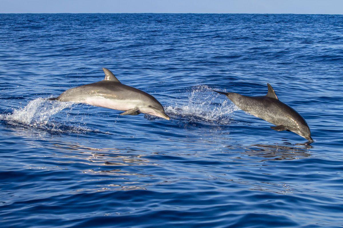 Avistamiento de delfines en la costa española  Donde ver animales en libertad en España