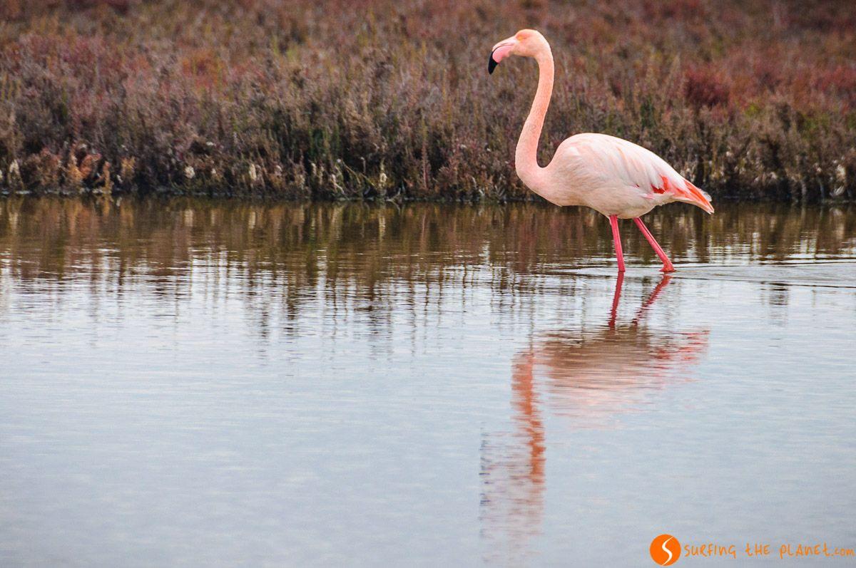 Avistamiento de flamenco en España   Donde ver animales en libertad en su hábitat natural en España